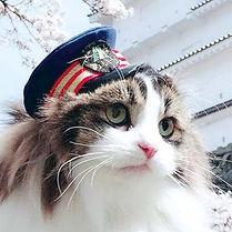 猫駅長.jpg