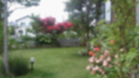 tasha2.jpg