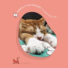 保護猫カフェラブラブ_8459.jpg