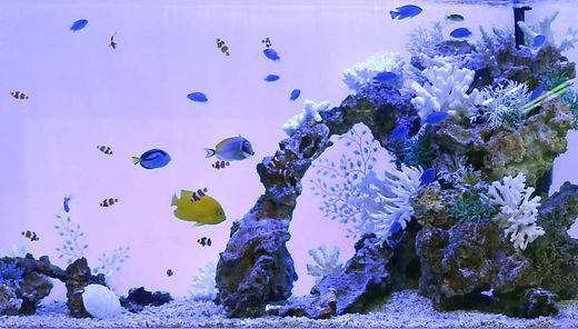 海水90㎝水槽.jpg