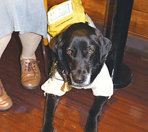 盲導犬5_1925.jpg