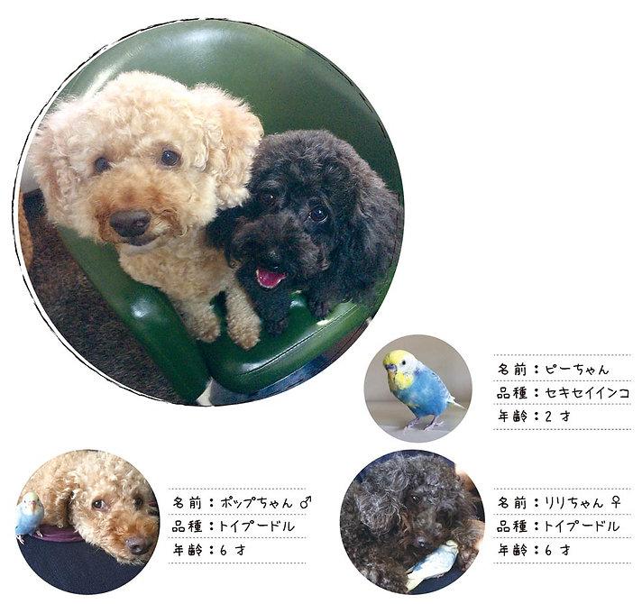 uchinoco2_pop.jpg