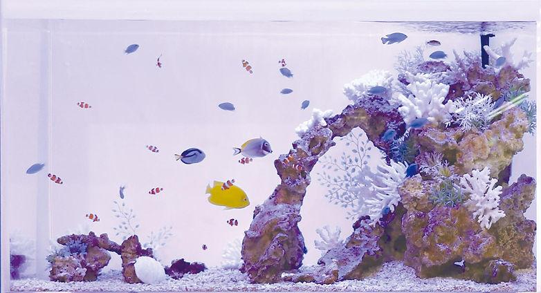左:海水90㎝水槽.jpg