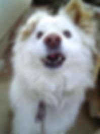 特集記事VOL1-犬1.jpg