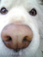 特集記事VOL1-犬3.jpg