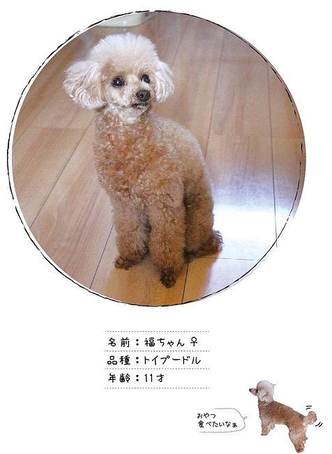 Uchinoco_福ちゃん.jpg