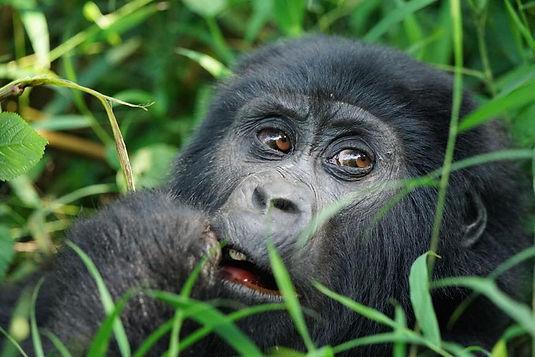 Endangered Wildlife Conservation
