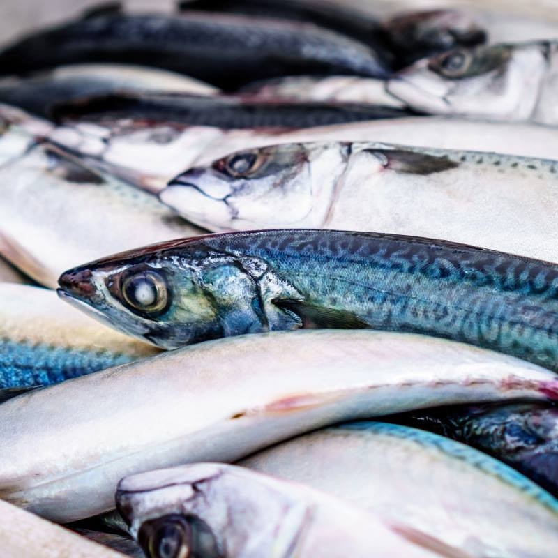 Oily Fish is a Good Source of Vitamin D