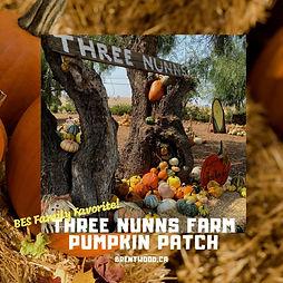 Three nunns farm Pumpkin patch.jpg