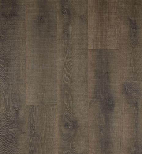Wilson Oak.jpg
