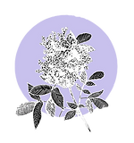 Elderflower_Lilac_3_edited_edited.png
