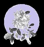 Elderflower_Lilac_3_edited_edited.png