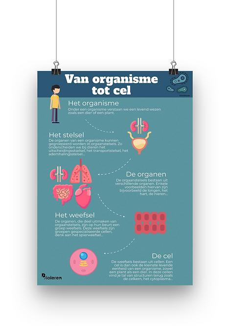Wandplaat - Van organisme tot cel
