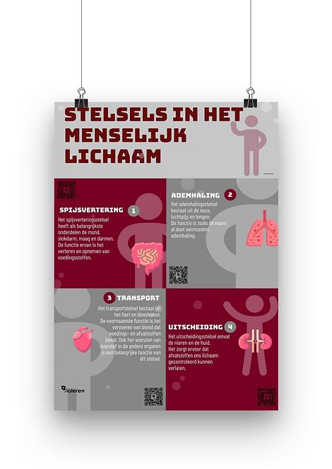 Wandplaat - Menselijk lichaam