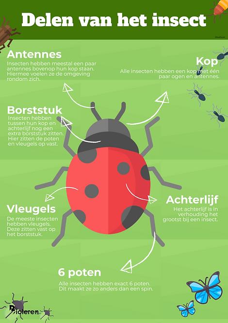 Wandplaat - Insect