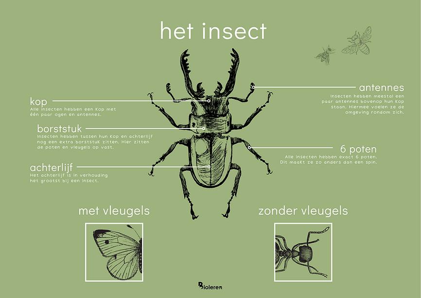 Wandplaat - Het insect.png