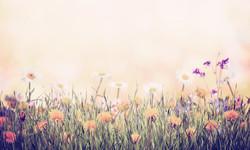 Vintage Background With Flower_edited