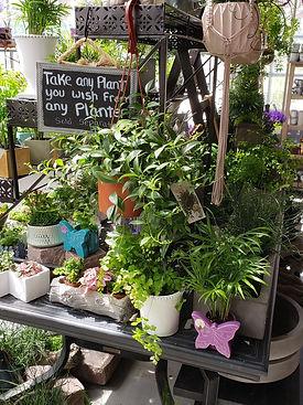 indoor plants.jpg