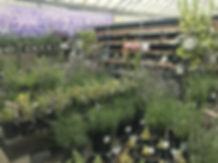lavender 1 gallons.jpg