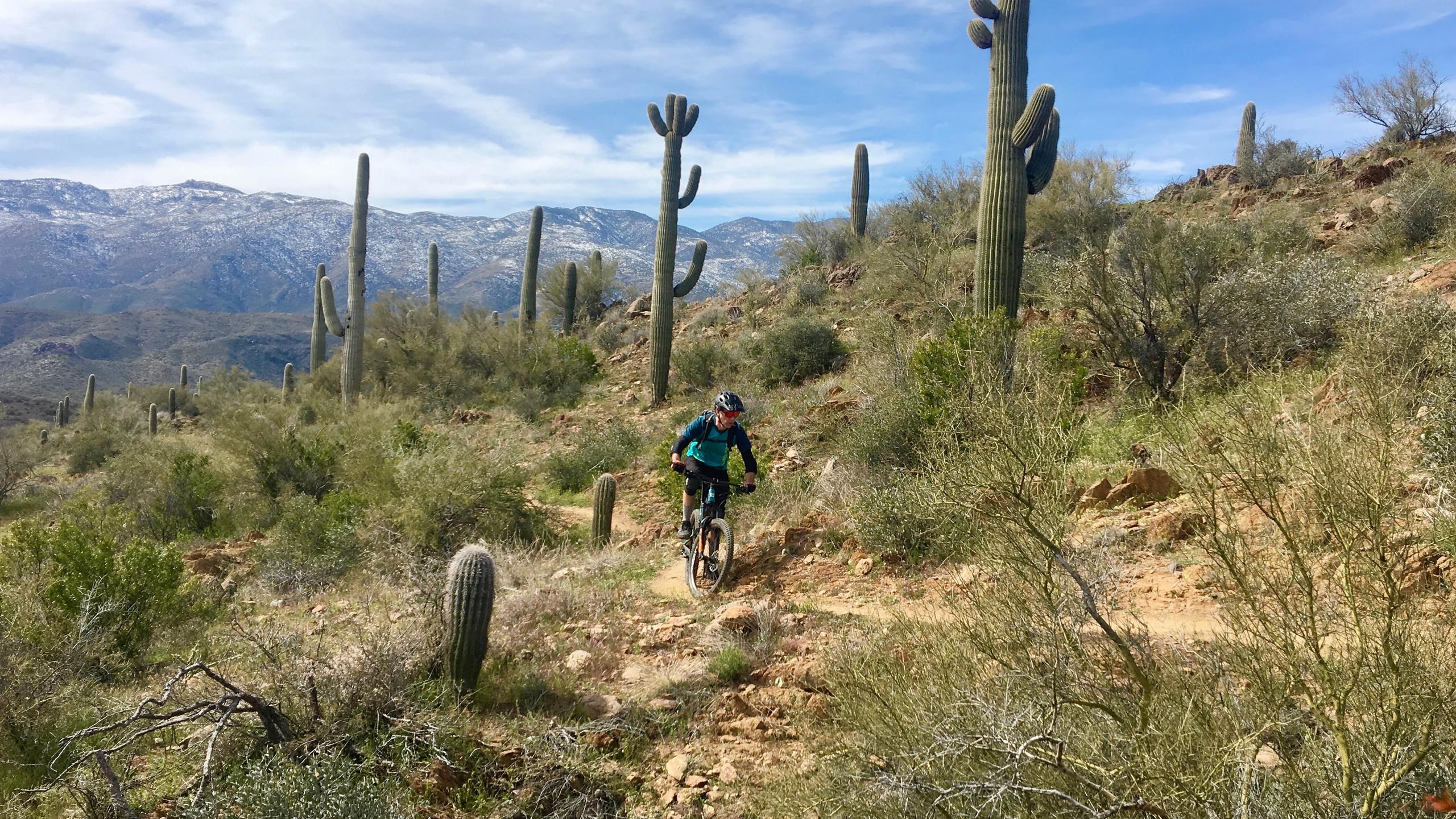 Riding amongst the saguaros