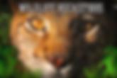 Wildlife Rockstars.png