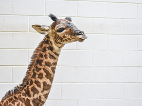 First Baby of 2021 Born at the Virginia Zoo
