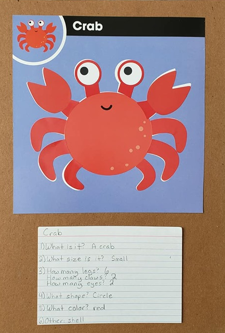 A sticker art picture of a crab along with these questions written on a card: What is it? What size is it? How many legs? How many claws? How many eyes? What shape? What color?