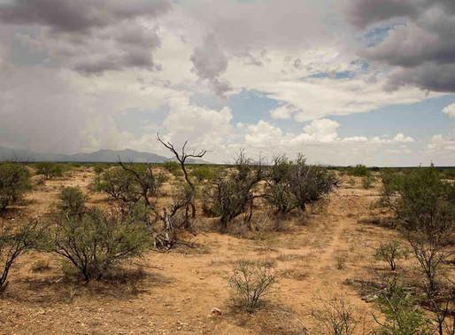 Cuarenta Días en el Desierto – por David Wanish