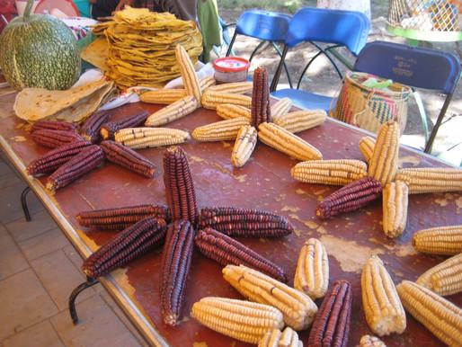 Viaje con Acción Permanente por la Paz Pone el Foco en los Temas de la Soberanía Alimenticia y la In