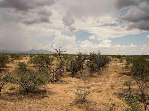 Forty Days in the Desert – by David Wanish