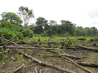 Verification Mission: Illicit Coca Crops Endangering Collective Land Rights