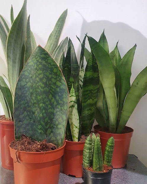 plantjunkie4.jpg