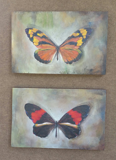 Two butterflies (C-20)
