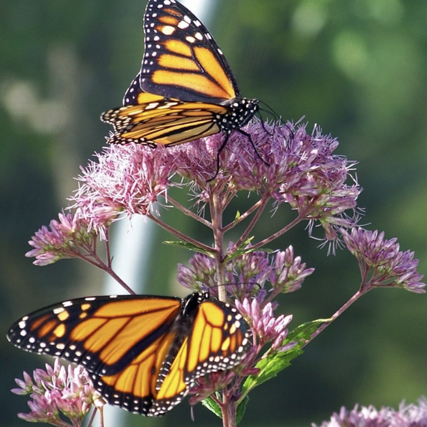 Fall clean-up at the Meg Gorrie Butterfly House, The Watershed Institute