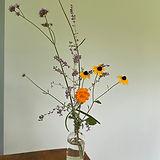 Perennials Collection.jpg