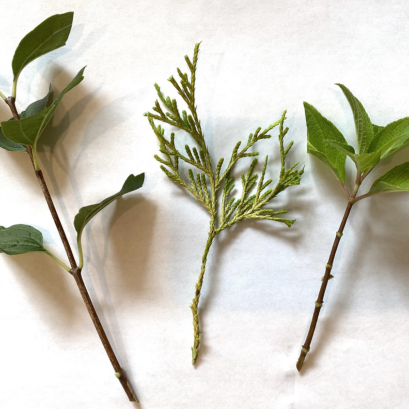 Hort  Workshop - Propagating Cuttings the Easy Way with a Forsythe Pot