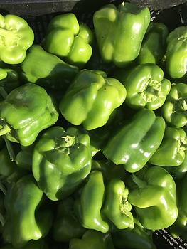 Green Peppers Victory Gardens COTR Church of the Resurrection Hamilton.HEIC