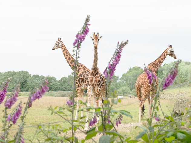animals-5481-copyright-aude-sirvain.jpg