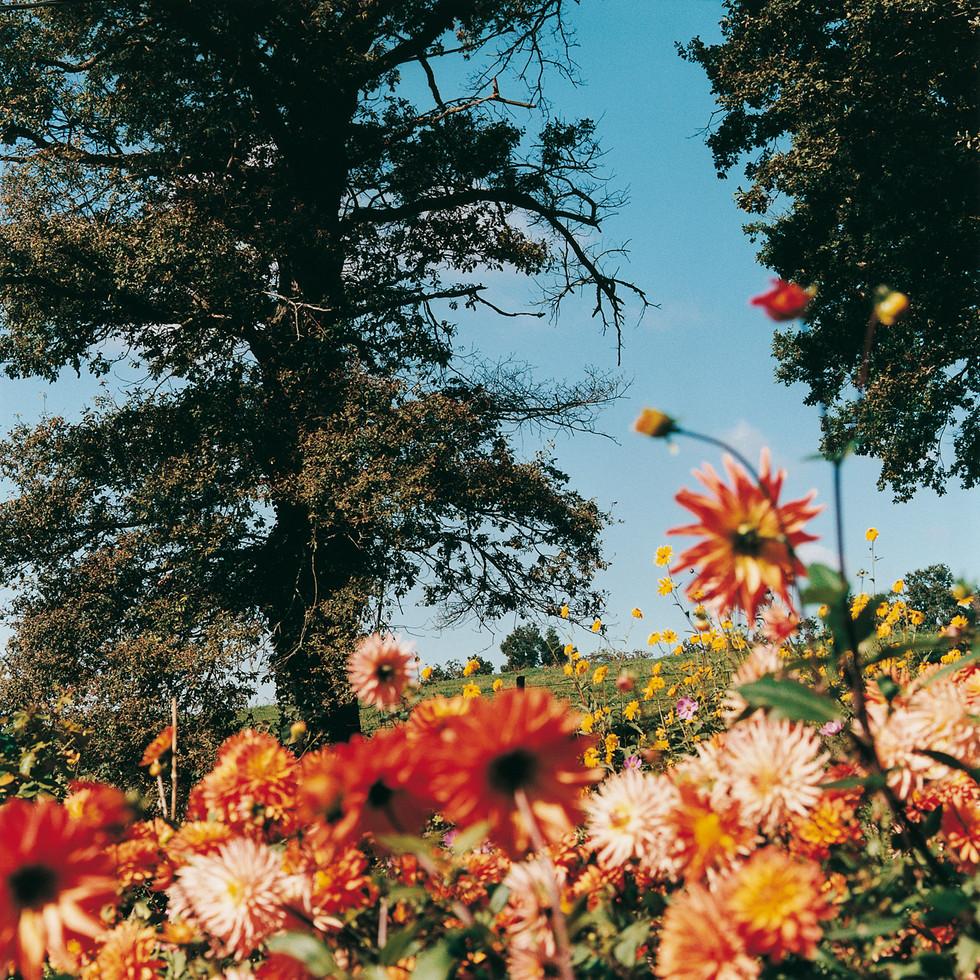 Geoffroy de Boismenu Libenter Tirage Fleurs