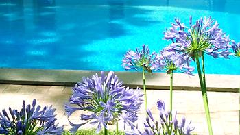 buba.pool.-bed-and-breakfast-roma-anzio-