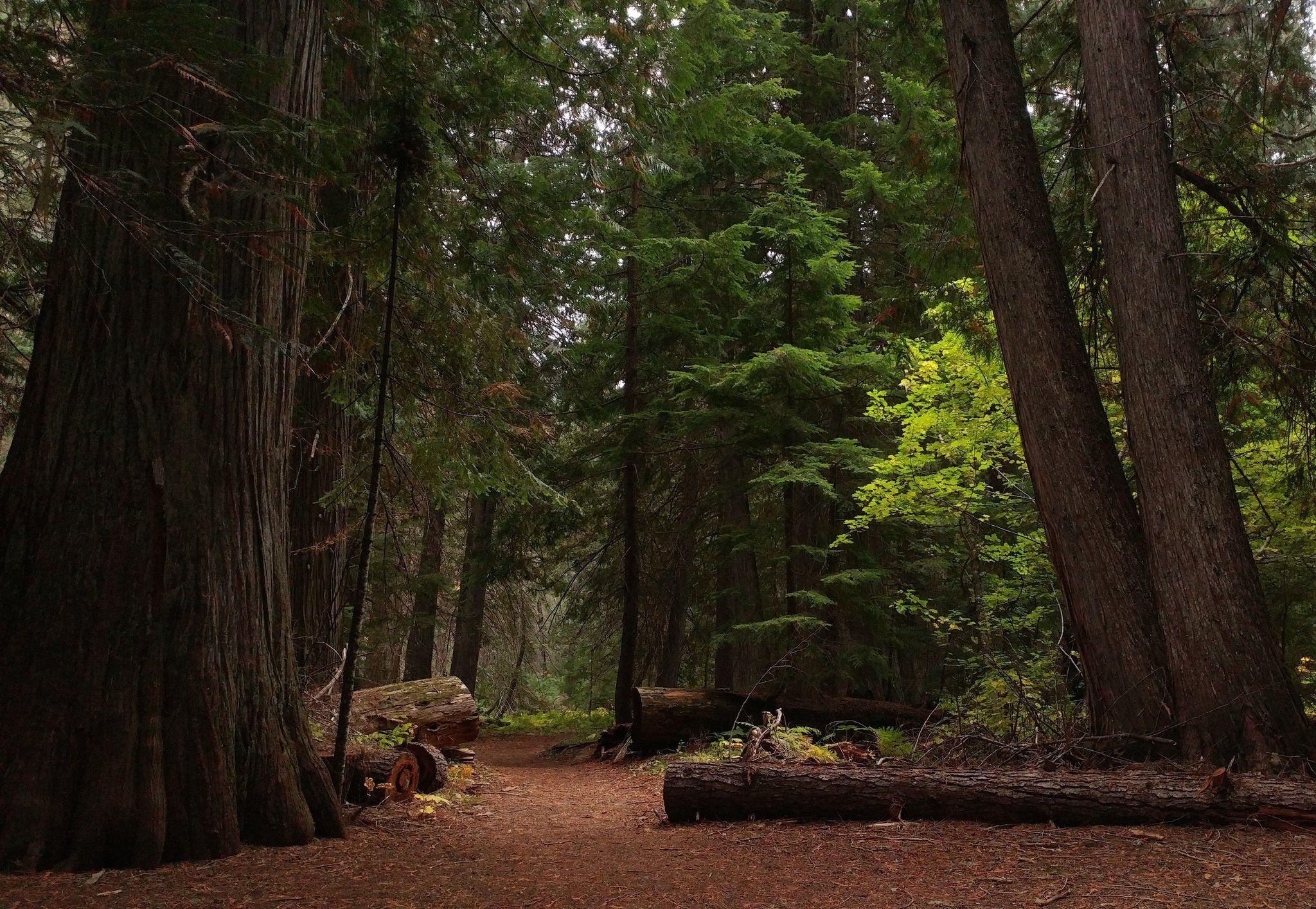 Settler's Grove Trail