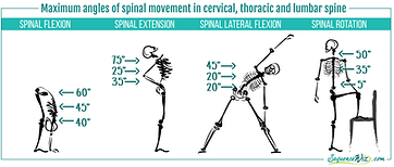 Mobility-of-the-spine-1024x436.png