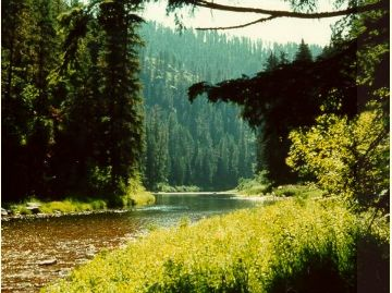 Coeur d' Alene National Forest
