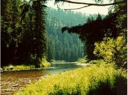 Coeur d' Alene National Forest