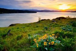 CDA Kootenai Country Spring Wildflowers