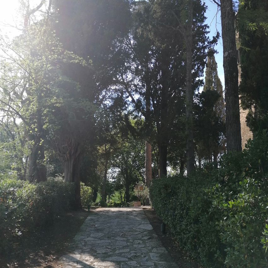 Palazzo Viviani a Montegridolfo viale alberato
