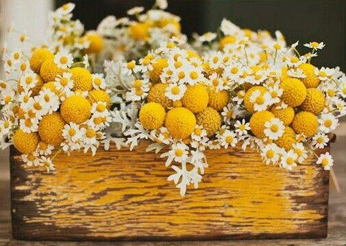 Matrimonio dolci come il miele: margherite e craspedia