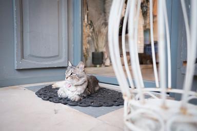 Cokelicò Boutique gatto seduto all'ingresso