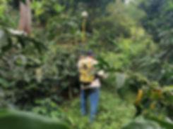 Anbau von Kaffee naturnah und nachhaltig