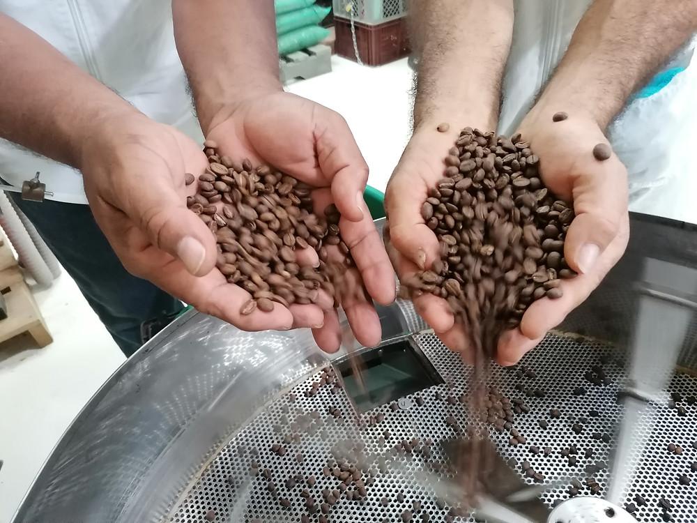 Kaffee Röstung biodivers bio